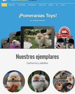 Pomerania toy